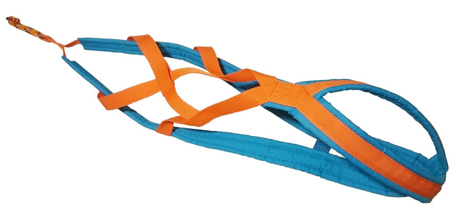 RaceDog padded harness X-Back Zemgus Comfort