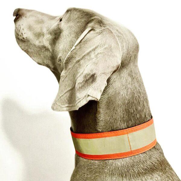 RACEDOG safety reflective collar 5